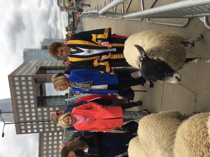 City of London Sheep Drive